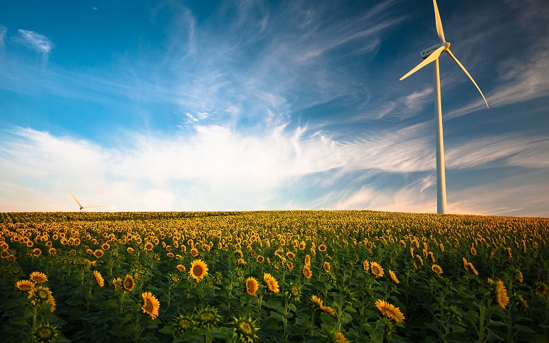 Wind turbine in a field of sunflowers with a clear, blue sky in the background